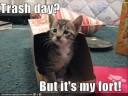 Srandovní fotky koček  video online